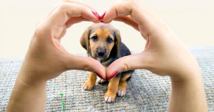 Read more about the article Τι λέει το ζώδιο του σκύλου σου για την προσωπικότητά του;
