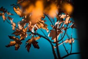 Read more about the article L'autunno e la metafora dei rami secchi