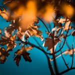 Luce attraverso foglie in autunno