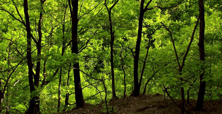 Come fotografare le foreste