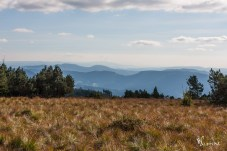 Schwarzwald so weit das Auge reicht