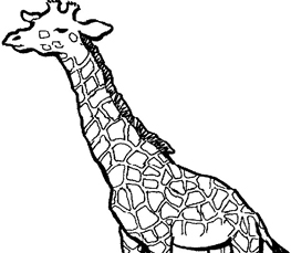 giraffe coloring pictures giraffe pictures you can color