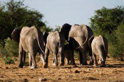 20091104_Namibia_2889b_web
