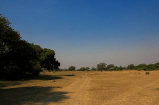 Das saftige Tal des South Luangwa
