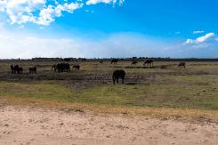 Elefanten am Ufer