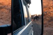 Elefanten im Rückspiegel