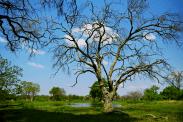 Oase im Okavango-Delta