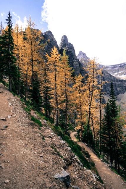 Der Herbst hat die Nadeln schon gelb gefärbt