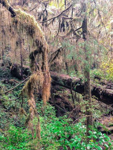 Regenwald im Pacific Rim National Park Reserve, Vancouver Island