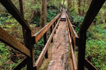 Brücke durch den Regenwald im Pacific Rim National Park Reserve, Vancouver Island