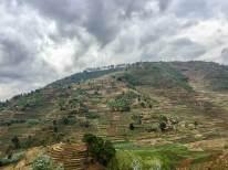 Reisebericht Ruanda: Felder auf den Hügeln