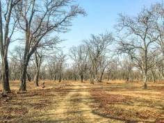 Die Waldlandschaft im Luangwa-Tal