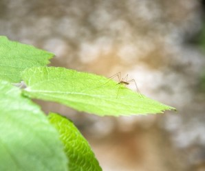3 tecniche infallibili per cacciar via le zanzare in estate