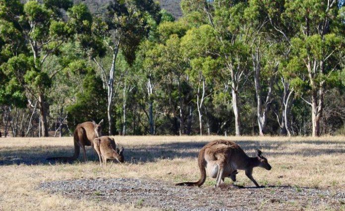 सोलो ऑस्ट्रेलिया में यात्रा करते हैं