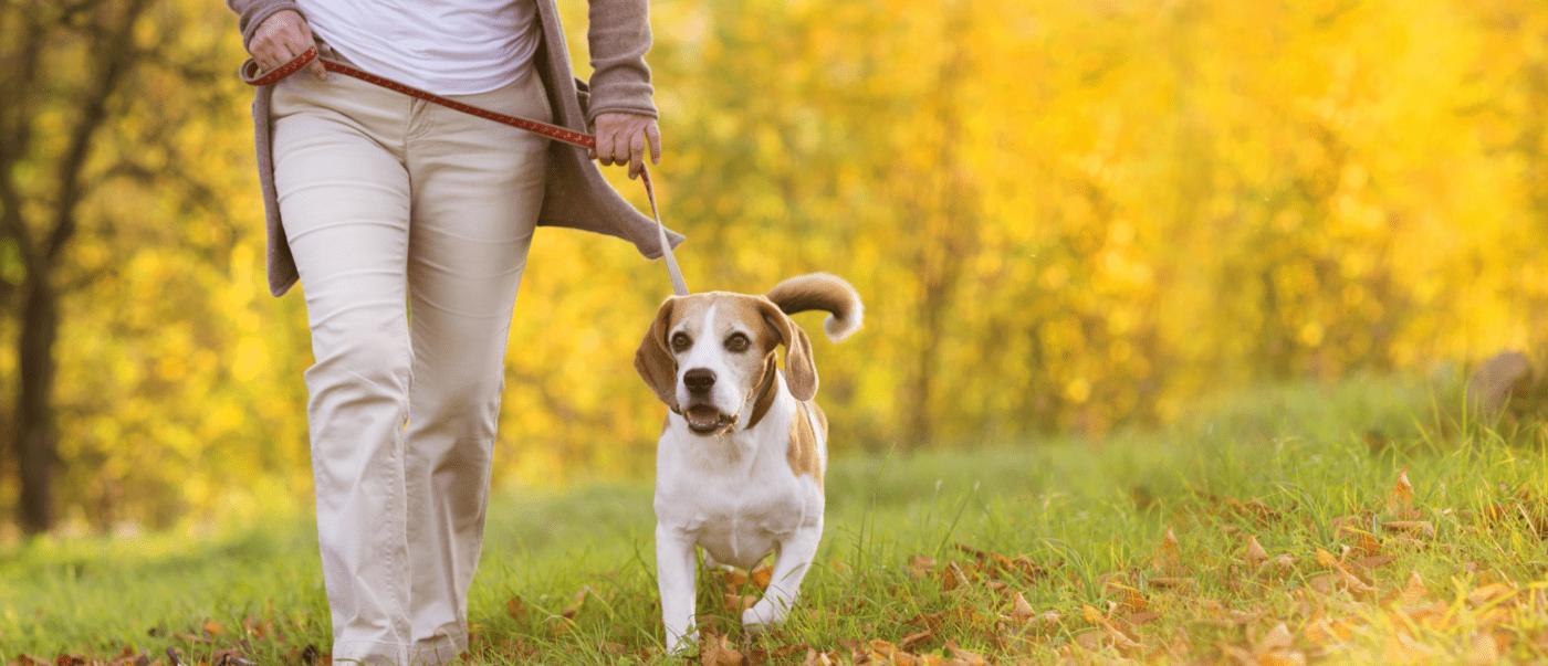 Dog on a walk