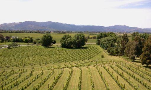 highfields-vineyard-marlborough-new-zealand