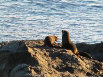 seal-colony-new-zealand