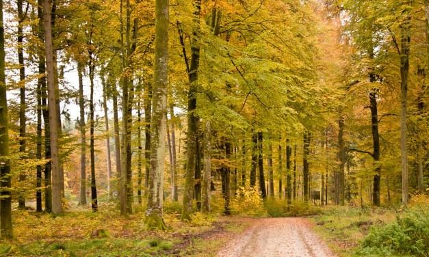 Stunning Fall Walks In Connecticut