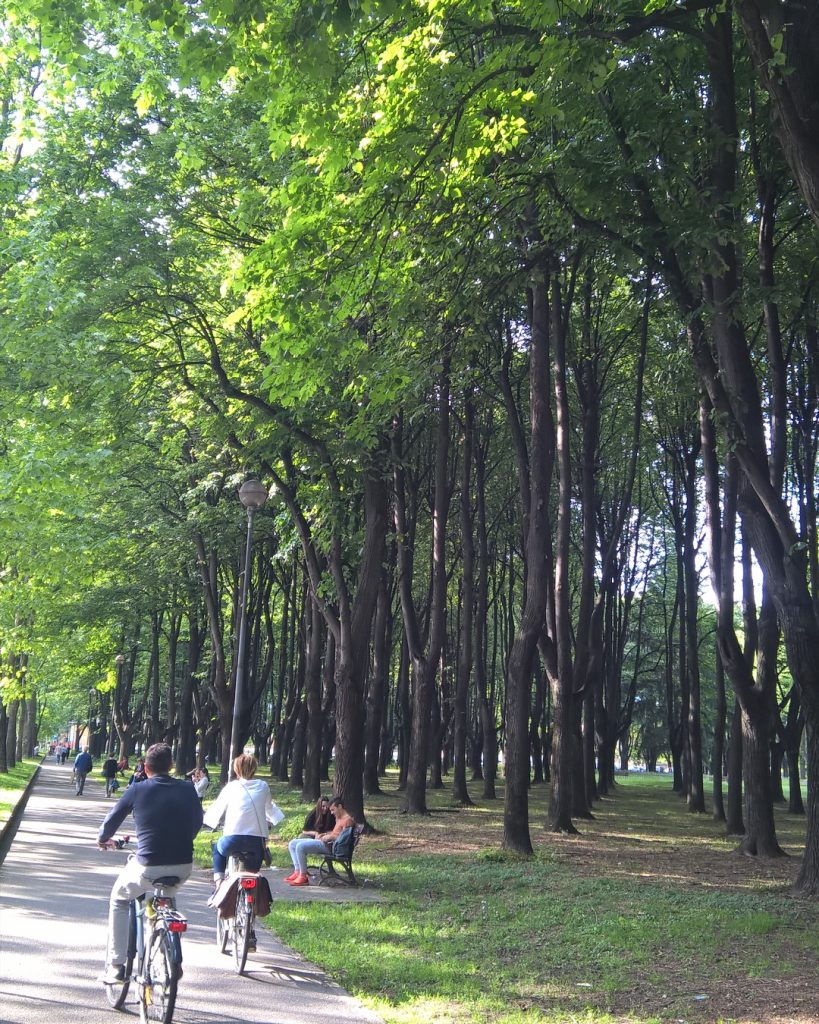 The trees Monza Park, Italy