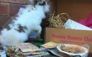 Happy Bunny Club