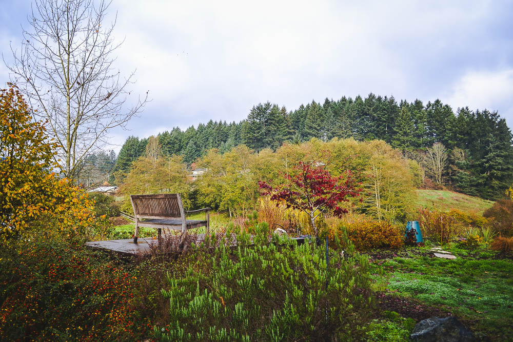 Brentwood bay reading spot in the autumn garden