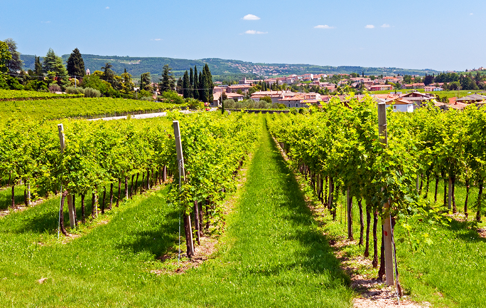 Vineyards of Valpolicella
