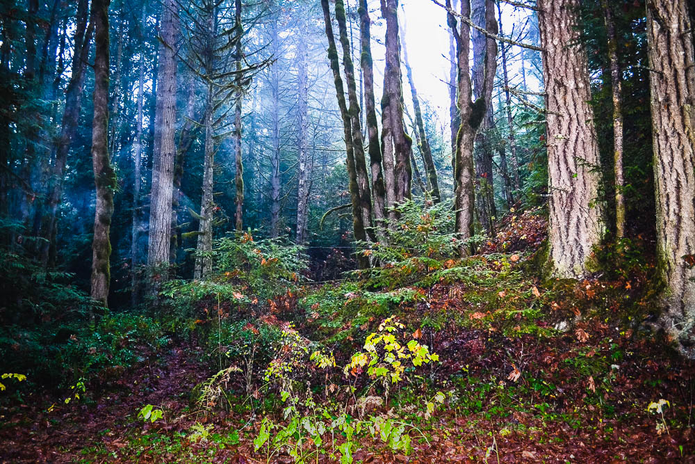 Spooky woods in Gowlland Tod Provincial Park Vancouver Island