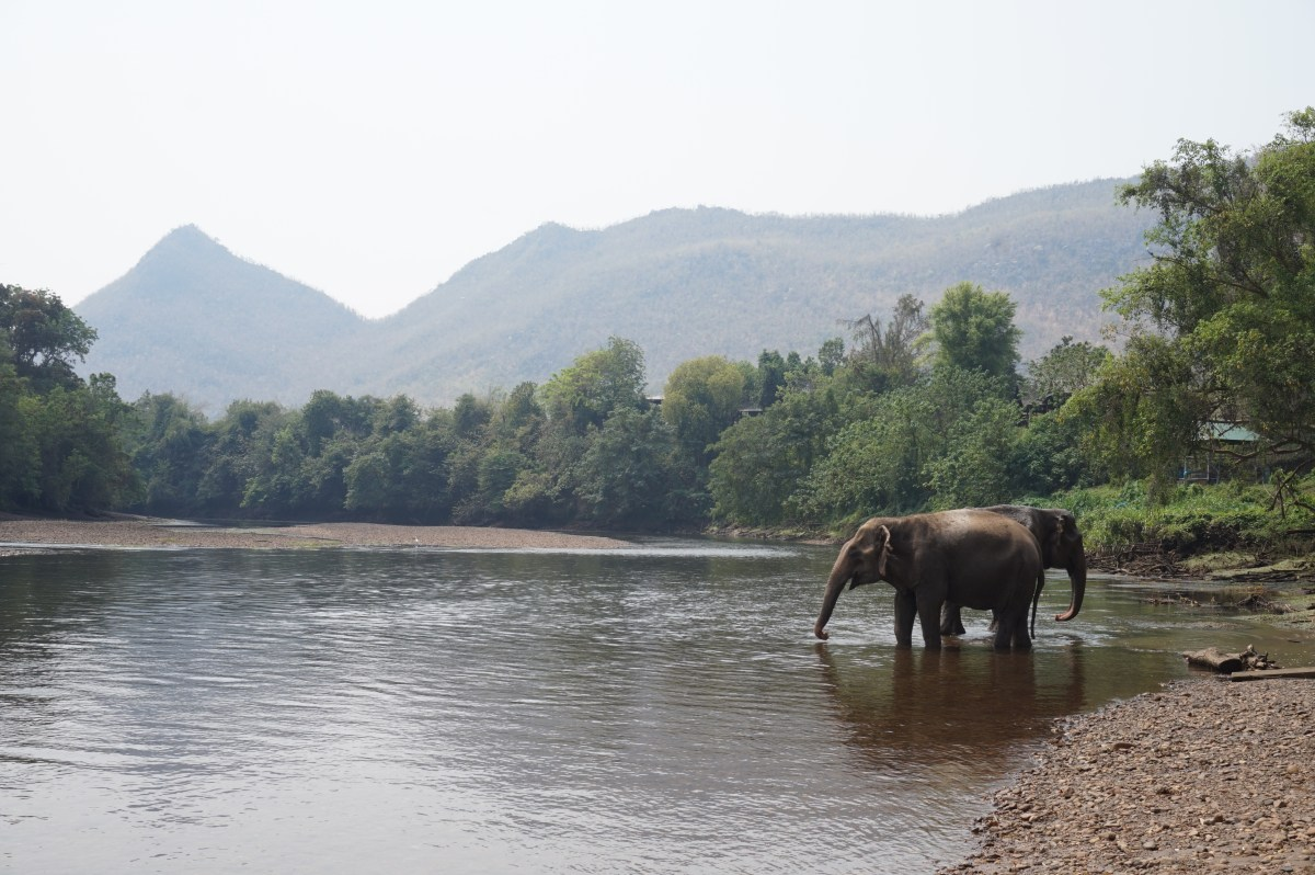 View of elephant bathing in the river