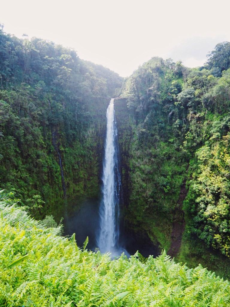 view of lush green fauna waterfall