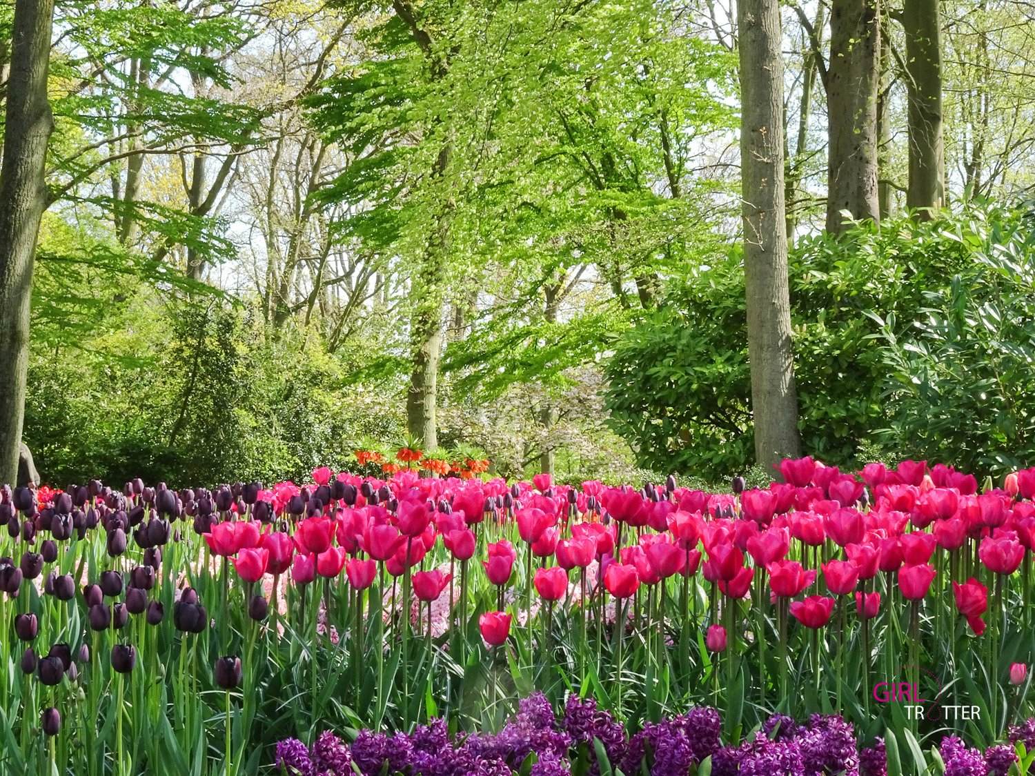 Roadtrip aux pays-bas hollande - Keukenhof