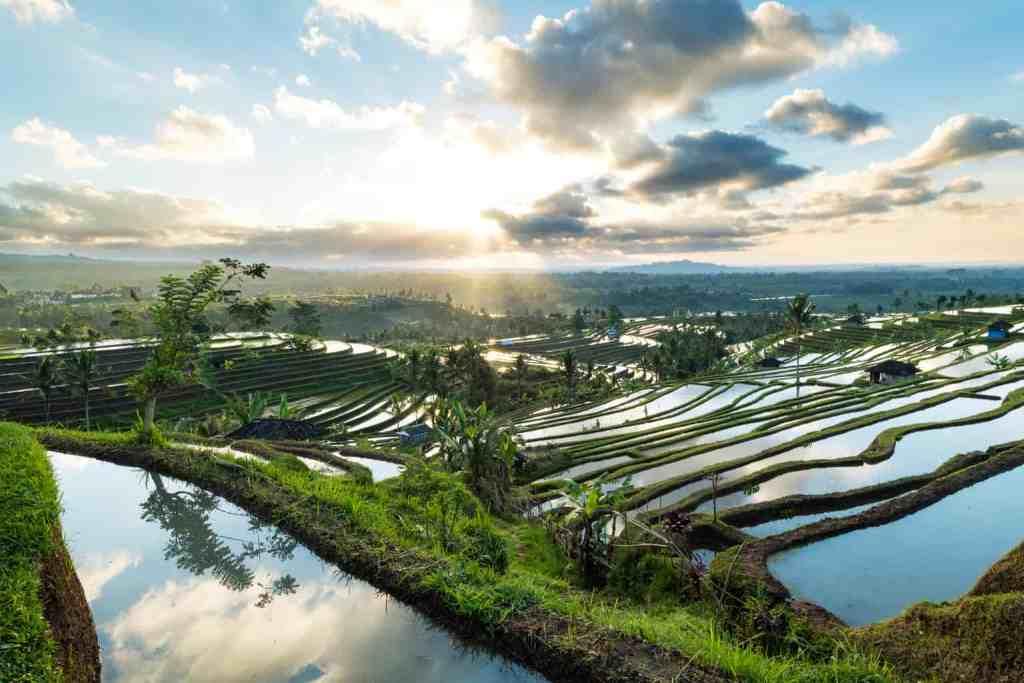The beautiful sunrise over the Jatiluwih Rice Terraces in Bali.