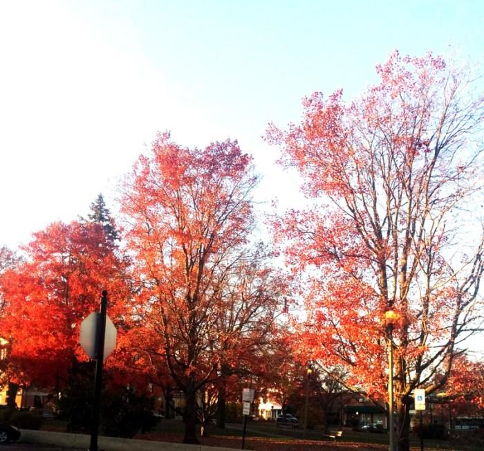 Fall Day Beauty