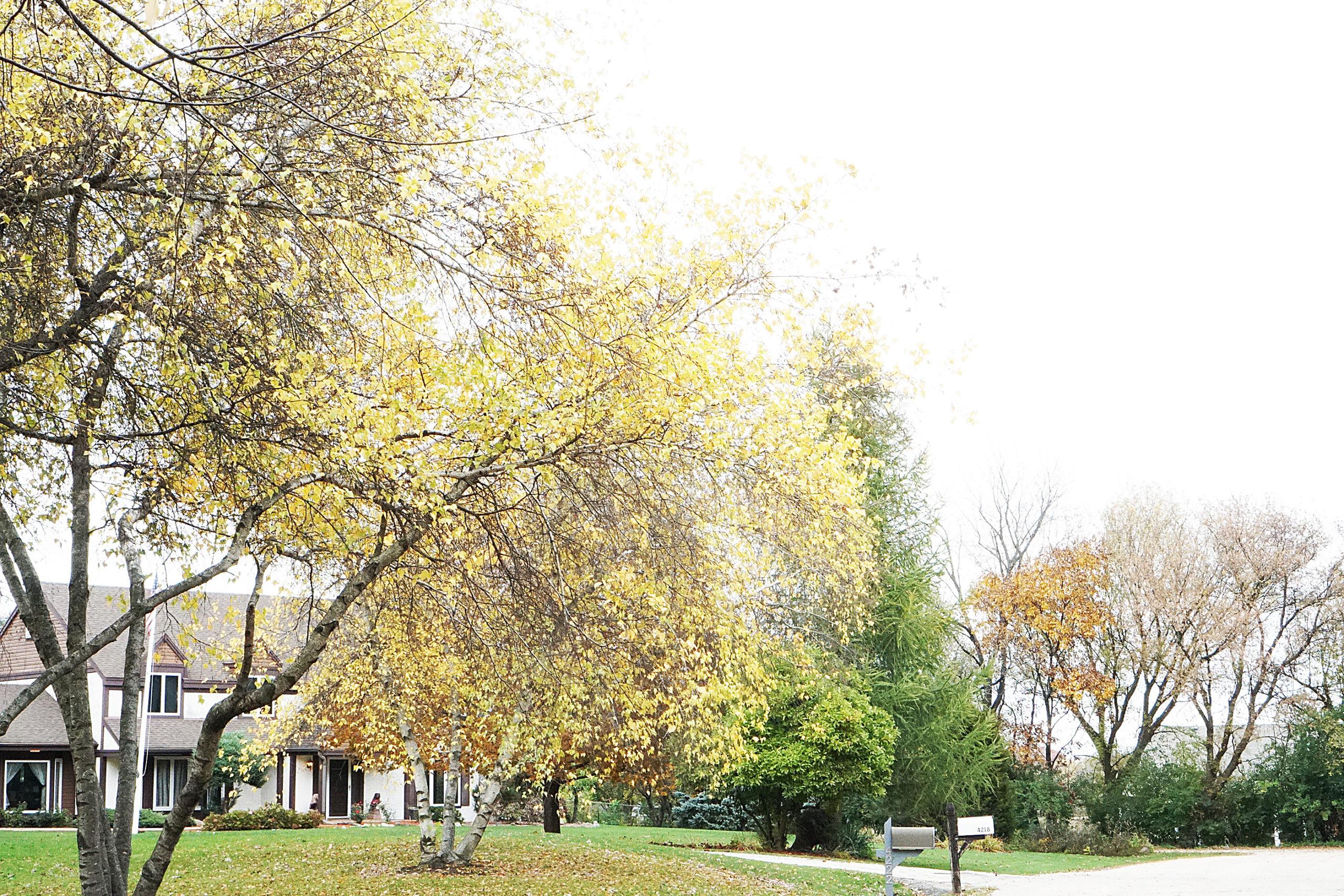 fall yellow in bloom