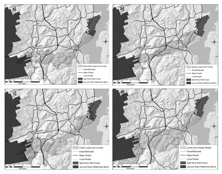 Minimum cost-distance habitat linkages for a) black bear, b) bobcat, and c) fisher. These were merged to create the functional habitat linkage d)