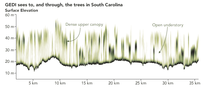 GEDI maps out the profile measurements of a South Carolina woodland. Graphic: Joshua Stevens, NASA, 2019.