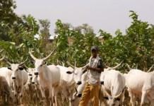 Herdsmen Don't Carry Arms - Miyetti Allah
