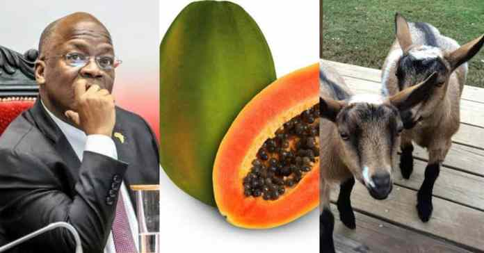 President raises alarm as pawpaw and goat reportedly test positive to Covid-19