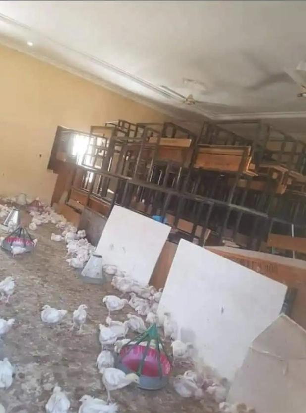 IMG 20200716 165109 034 - Faculty Turned To poultry farm In Borno State (Pictures)
