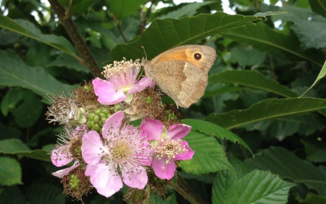 Cet été, papillonnez  en Morvan !