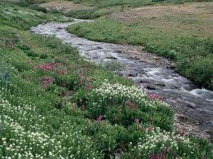 rivière campagne bretagne
