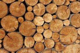drywoodafsgdhfjgkhlj;kiuoiytuyretdbcnvbm