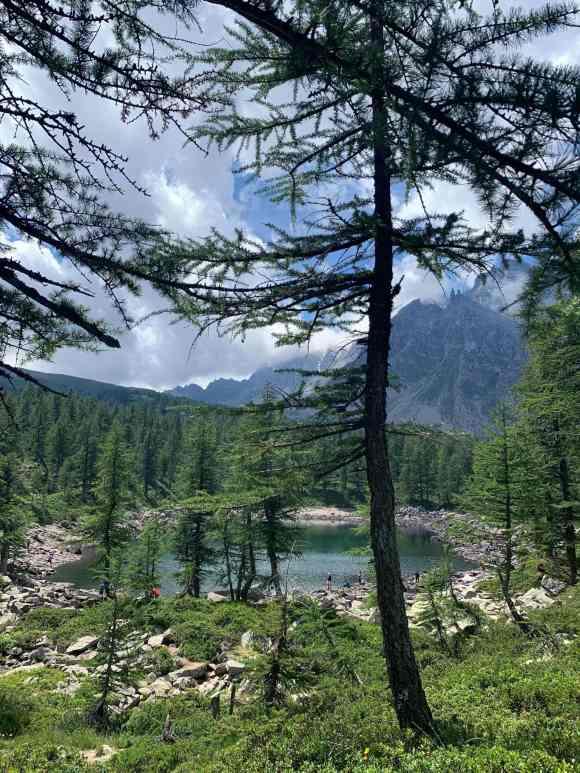 vista tra gli alberi del lago nero di devero