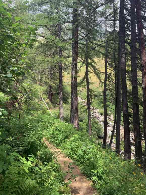 sentiero nel bosco che conduce al lago nero