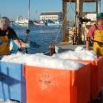 Port de Pêche de Saint Guénolé