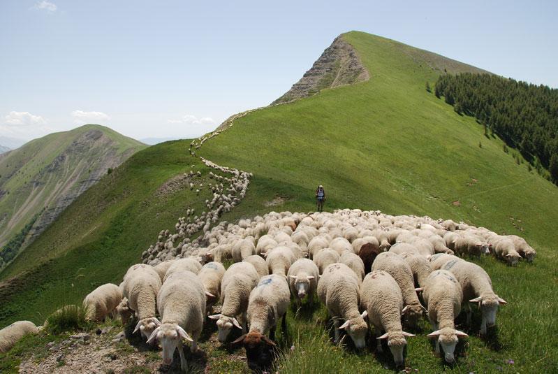 Agriculture Gites De France Des Alpes Le Portail