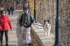 En hundelufter i en park