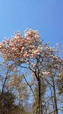 magnolia_orto_bot