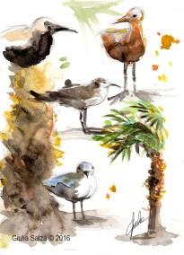 Uccellini da spiaggia