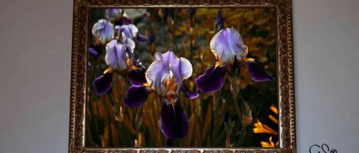 irisblommor i trädgården