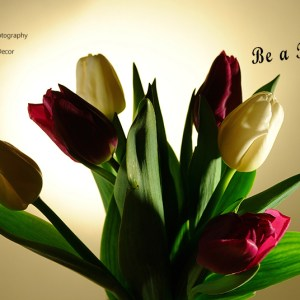 Be a Tulip